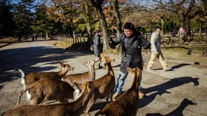 And me trying to feed the deers too, but I was visibly intimidated by the over-friendly deers who kept coming at me.